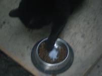 08h50 - L'heure des chats